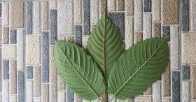 sumatra kratom leaves