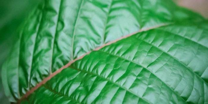 Green Vein Kratom