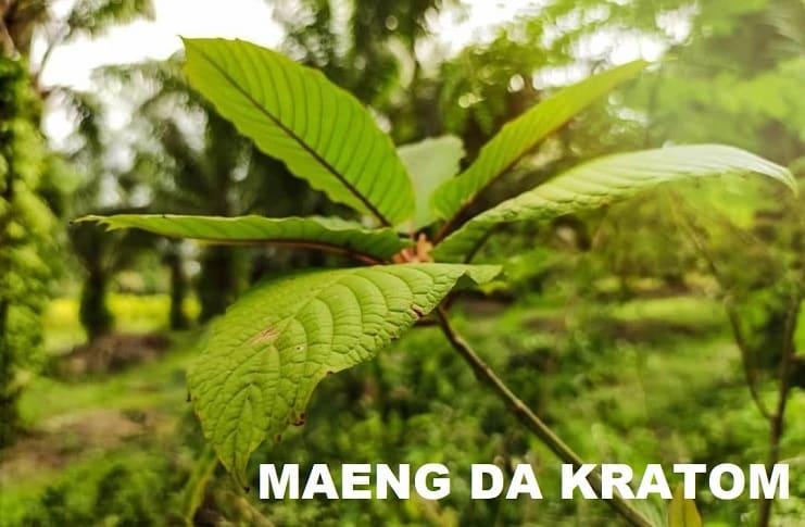 Maeng Da Pimp Grade Kratom Information