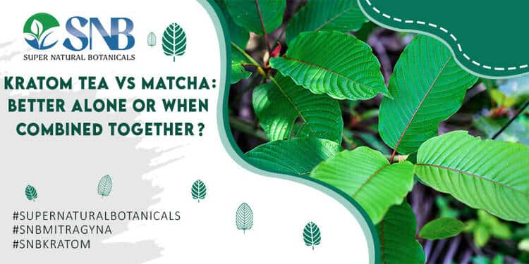 Kratom Tea vs. Matcha