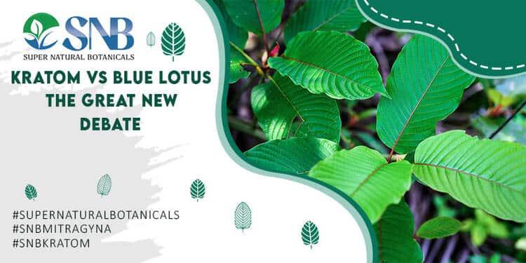 Kratom Vs Blue Lotus