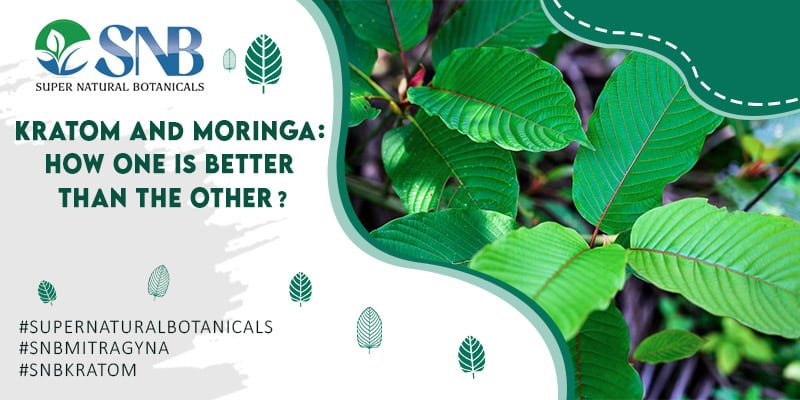 Kratom and Moringa How One Is Better Than The Other